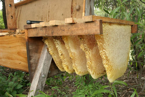 Exceptionnel The Bees Build Their Own Beautiful Comb Without Wax Foundation!